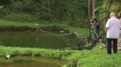 Famiglia Libardoni: Encontro Xerém, RJ, Brasil. Rede 02. IMG_8625. 191,2...