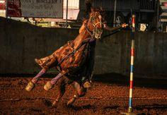 Pole Bending. AQHA. Sorrel Gelding. Barrel Racing. Summer.