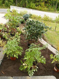 RudusPiha Facebook seurantakohde 2014. Kasvit on sijoiteltu valmiiksi istutuspaikoille. http://www.rudus.fi/pihakivet