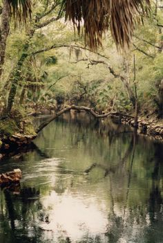 Creek off the St. Marks River, North Florida. So peaceful.  Jake in, Danger in Blackwater Swamp, kidnaps BJ and takes her to his hide-out on the creek. http://www.syppublishing.com/danger-in-blackwater-swamp-1/