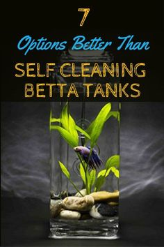 7-better-options-than-a-self-cleaning-betta-fish-tank