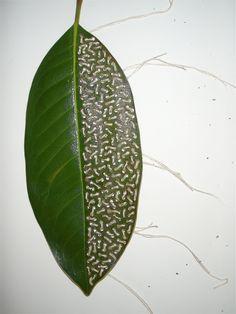 Stitched Magnolia leaf. 2010. Dry Leaf Art, Decorative Leaves, Embroidery Leaf, Embroidered Leaves, Fabric Cards, Creative Textiles, Crochet Leaves, Magnolia Leaves, Leaf Crafts