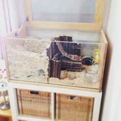 Dwarf Hamster Cages, Hamster Bin Cage, Cool Hamster Cages, Gerbil Cages, Diy Guinea Pig Cage, Hamster Life, Hamster Stuff, Hamster Natural Habitat, Habitat Du Hamster