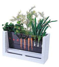 Mini garden...great idea so kids can watch the growth