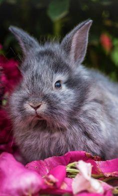 """loriedarlin: """"https://wallpaperscraft.com/download/rabbit_rabbits_fluffy_gray_flowers_115903/480x800 """""""