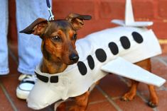 Charlottesville Doxie Meetup supports local charity