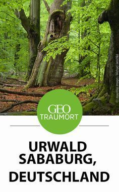 The Sababurg Primeval Forest shows how beautiful wilderness can look - Sababurg Primeval Forest, Germany. The forest area under nature and landscape protection near the S - Appalachian Trail, Travel Around The World, Around The Worlds, Vacations To Go, Travel Alone, How Beautiful, Beautiful Forest, Wanderlust Travel, Germany Travel