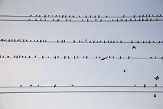 Birds on telephone wires.
