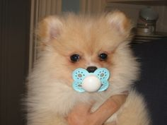 OMG!! As a Pom Mom, I really see why pacifiers are sometimes necessary...