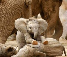 We all need a baby elephant in our lives.