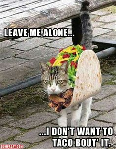 Leave me alone.. I don't want to taco bout it...