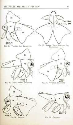 Tropical Aquarium Fishes - goldfish diagram. http://vintageprintable.com/wordpress/wp-content/uploads/2011/10/Animal%20-%20Fish%20-%20Goldfish,%20diagram.jpg