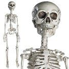 "Prextex 30"" Halloween Skeleton- Full Body Halloween Skeleton with Movable Joints and 2 Sets of Body Accessories for Best Halloween Decoration"