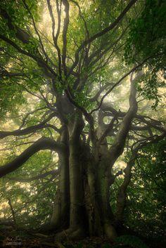 AKI - me-lapislazuli: King of the forest | by...