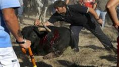 Only 5.266 signatutes so far. We need many more. Please keep on repodting this. It's September and the butchering has begun. Let's stop it! Petition · SR ALCALDE DE TORDESILLAS :PROHIBA INMEDIATAMENTE Y DEFINITIVAMENTE LA FIESTA DEL TORO DE LA VEGA ANTES DE ESTE SEPTIEMBRE DEL 2015. · Change.org 5.266//15-09-06 #Petition #AnimalSlaughter #AnimalRights