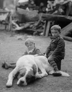 ~+~+~ Antique Photograph ~+~+~  Boys with gigantinormous dog!  1909