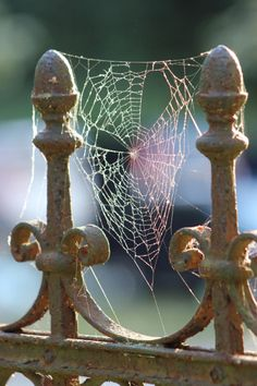 Spider's Web by Christian H.
