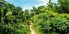 Wilde Natur auf Koh Phayam Bangkok, Wilde, Strand, Vineyard, Thailand, Country Roads, Plants, Outdoor, Country