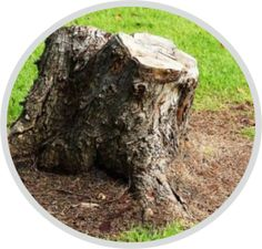 Wurzelstockfräsen - Wurzelstock entfernen Nth Root, Lawn And Garden