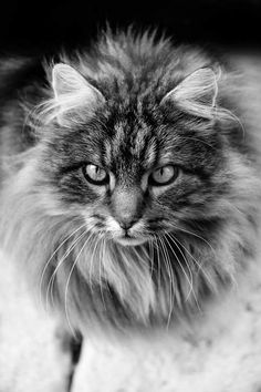 Photo Mon chat Fripouille - Partagez vos photos en ligne et albums photos de voyage - GEO communauté photo