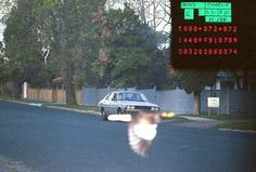 Flashé par un radar, il est sauvé par un oiseau!