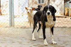 ELDON Adopter Moyen chien Junior - Galgos France - Lot-et-Garonne - Chien croisé moyenne race - SecondeChance.org Foulayronnes