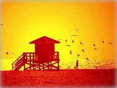 Siesta Key birds at sunset