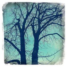 Spring - Tree - Hipstamatic