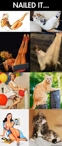 "Cats that look like pin-up girls…the way some of my cats ""pose"" look more like porn girls instead!"