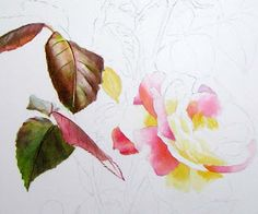 pink rose step by step demonstration - Realistic Watercolor and Oil Paintings, Fine Art and Watercolor Instruction by Doris Joa