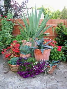 Different heights and textures in terracotta pots; from the sculptured spikes of. - Different heights and textures in terracotta pots; from the sculptured spikes of succulents to the - Succulents Garden, Garden Pots, Growing Succulents, Bottle Garden, Garden Shrubs, Flowers Garden, Container Plants, Container Gardening, Vegetable Gardening