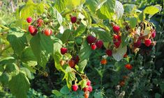 Fruit, Garden, Plants, Garten, Lawn And Garden, Gardens, Plant, Gardening, Outdoor