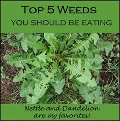 Eat Your Weeds: Top 5 Edible Weeds - Healthy Holistic Living// pulling weeds tomorrow - given that they are in an animal waste/ chemical free area, i might give some of these a try!