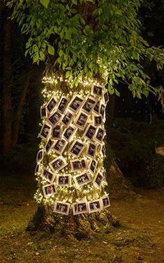 Lascia un ricordo agli sposi con una foto polaroid e decora i tronchi delle piante con fili di luci led e fotografie