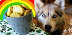 St Patty's Day dog treats - pot of gold dog treats DIY St. Patrick's Day Diy, Homemade Dog Cookies, Make Dog Food, Japanese Spitz, Diy Dog Treats, Snow Dogs, Puppy Food, Dog Snacks, Diy Stuffed Animals