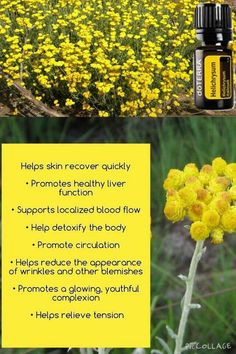 Helps skin recover quickly Helichrysum essential oil https://www.instagram.com/essentialoilswithbetsy/ essentialoilswithbetsy@gmail.com