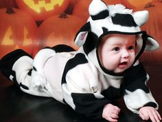 Baby Cow Halloween Costume Babies' halloween costumes: make big version for finn