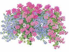 Мечты с ароматом лета Особую привлекательность придают данной летней композиции нежные, филигранные цветы, переплетающиеся друг с другом. На заднем плане возвышаются пурпурные соцветия герани (Pelargonium 'Savannah Blue') (1). Ниспадающие побеги, густо покрытые синими веерообразными цветками сцеволы (2) украшают первый ряд цветочного ящика. Добавляет композиции гламура и ампельная герань 'Mexica Nealit' (3), бросающаяся в глаза своими нежными розовыми цветками в белую полоску.