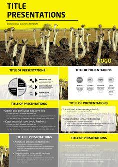 Ostrich farm PowerPoint templates