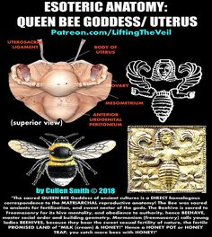 Esoteric Anatomy Discovered in Ancient Goddess Symbolism | ŁÌ₣†Ì₦₲ †ђΣ √∄ÌŁ on Patreon Ancient Egypt, Ancient History, Ancient Goddesses, Templer, Arte Obscura, Egyptian Symbols, Knowledge And Wisdom, Spiritual Wisdom, Ancient Civilizations