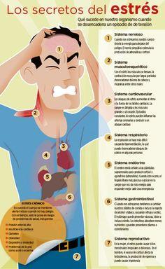 Qué sucede en nuestro organismo cuando sufrimos un episodio de estrés.