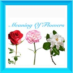 9 Solid Evidences Attending A Flower Meaning Love Is Good For Your Career Develo. Rose Color Meanings, Flower Meanings, Love Flowers, Paper Flowers, Primroses, Language Of Flowers, Career Development, Love Symbols, Flower Wallpaper