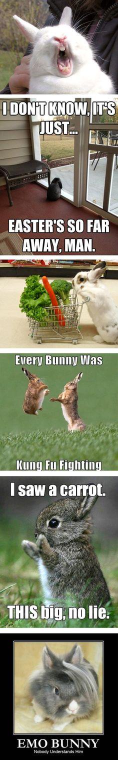 LOL....I love the Kung fu bunnies