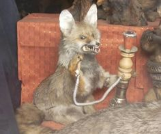 Look at this blog post of taxidermy gone wrong, it's terrifying