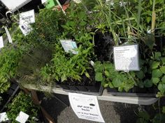 Athens Oh Farmers Market / Herbs