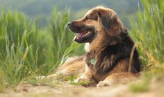 Enjoying The Sun - Another portrait scene of Lucy in the field. It was very hot and we relaxed a moment in the field :) If you like my dog portraits or macro images,stay in touch :) I wish you all a wonderful day and good start in the week :)