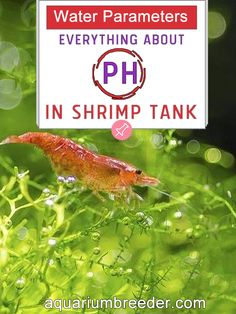 Water Parameters: Everything about pH in Shrimp Tank Aquarium, Dwarf shrimp, freshwater crabs, crayfish, fish, snails, care, maintenance, problems, treatment, measure, test kit.