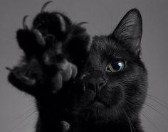 もう不吉だなんて言わせない!実は福を招く幸福の伝道師「黒猫」20選