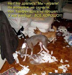Самые смешные котоматрицы / Питомцы
