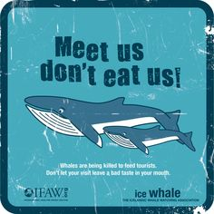 'Meet Us Don't Eat Us' campaign in Iceland :: Planet Whale (IFAW)